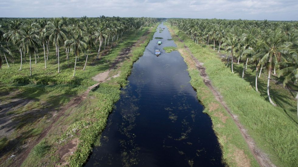 Optimism for Sustainable Peatland Agriculture is Here - and Growing – Tay Juhana Foundation